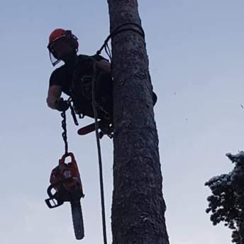 atle i trädet