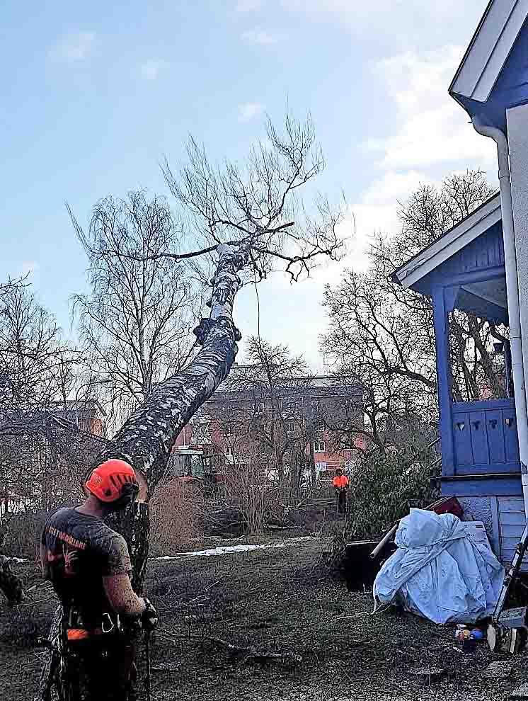 Trädfällning Lidingö